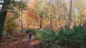 Beweging wandelen natuur rust tijd voor jezelf fit met simone son en breugel